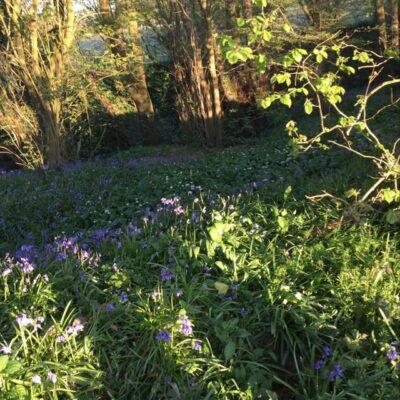 English Cottage Vacation Bluebells