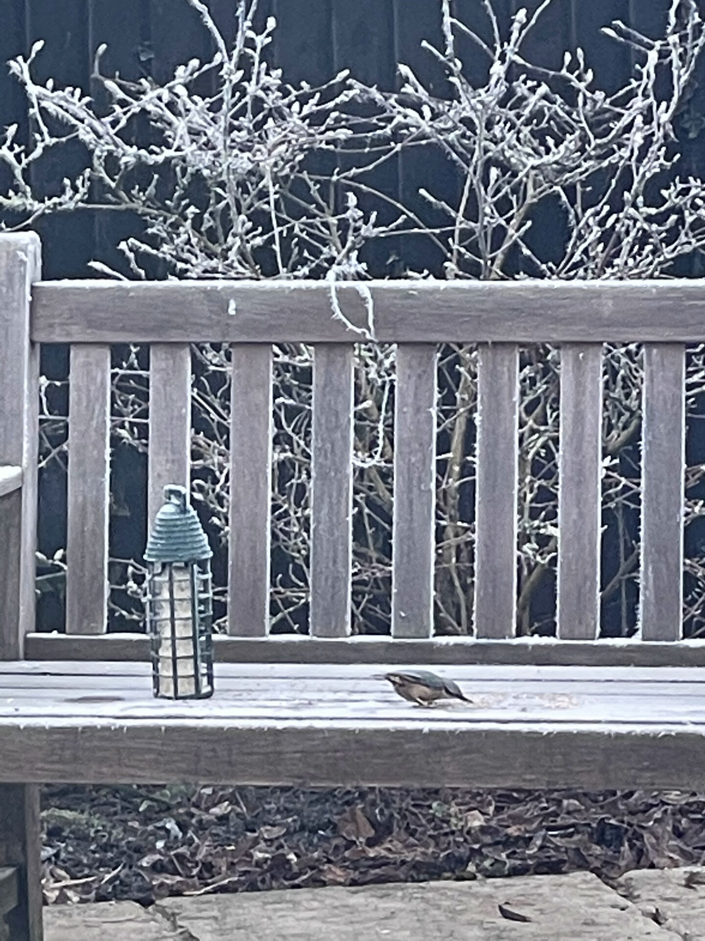 English Cottage Vacation Winter Garden